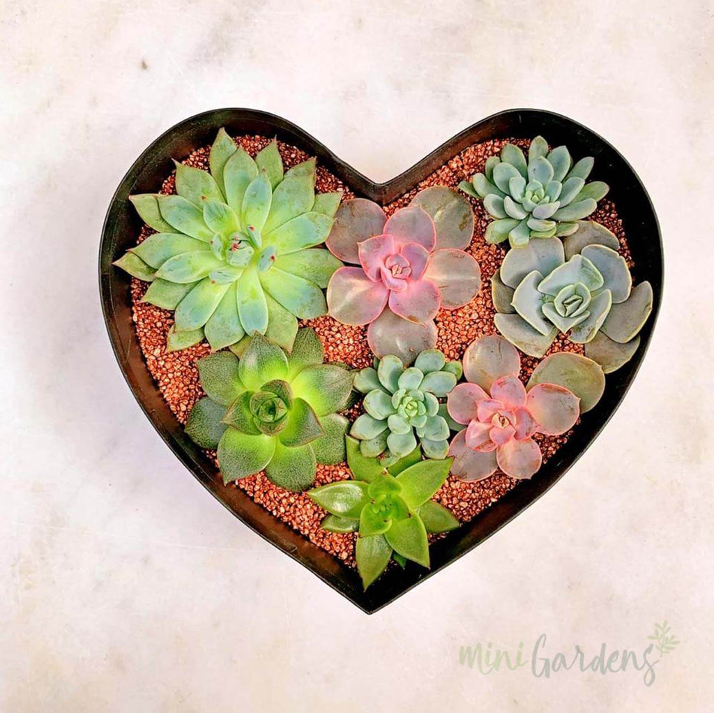 Heart Garden (Red) Buy from Online Store  MiniGardens.ae  Delivery Dubai, Sharjah, UAE