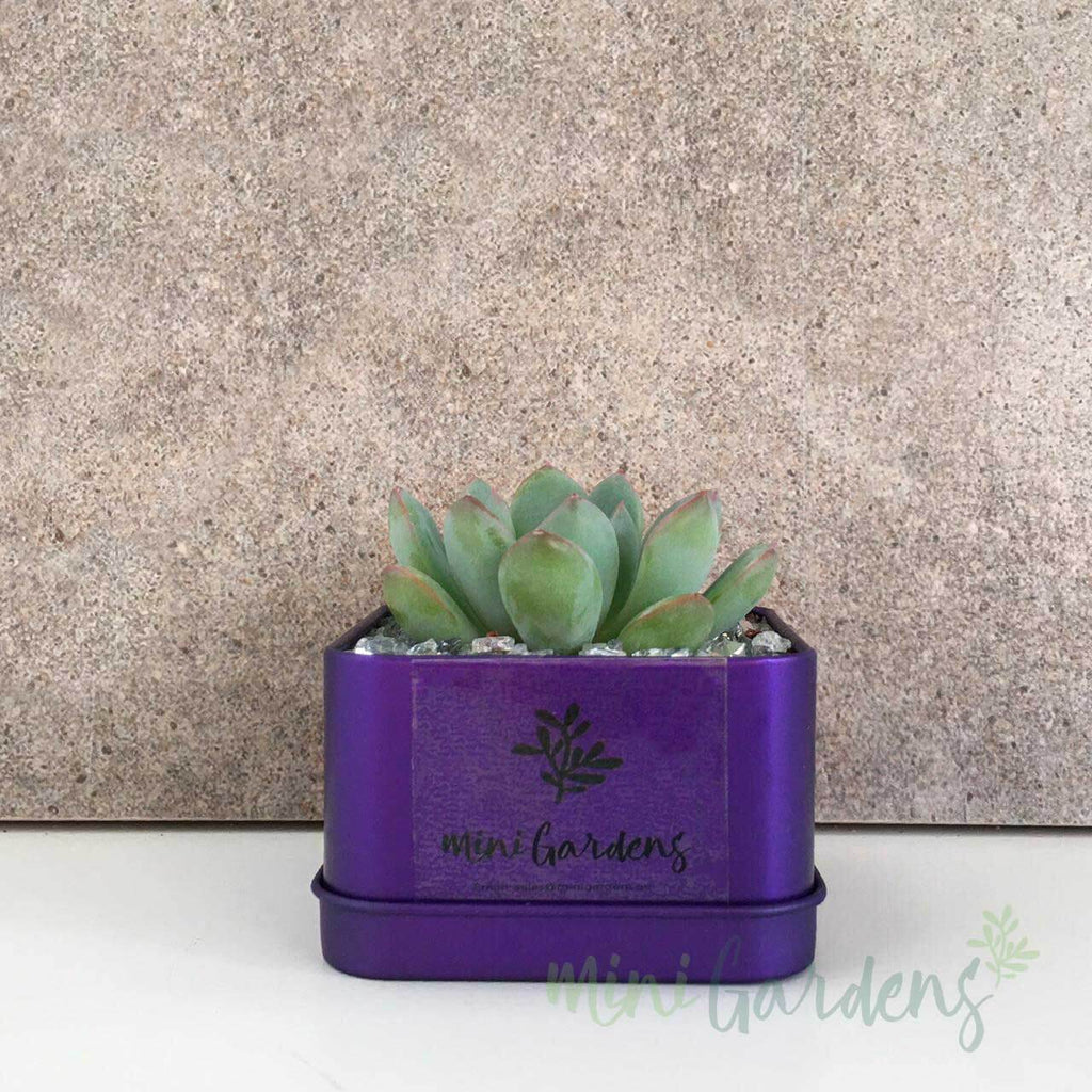 Online-MiniGardens-Corporate-Gifts-Floral-Succulents-Dubai-Sharjah-Abu-Dhabi-UAE