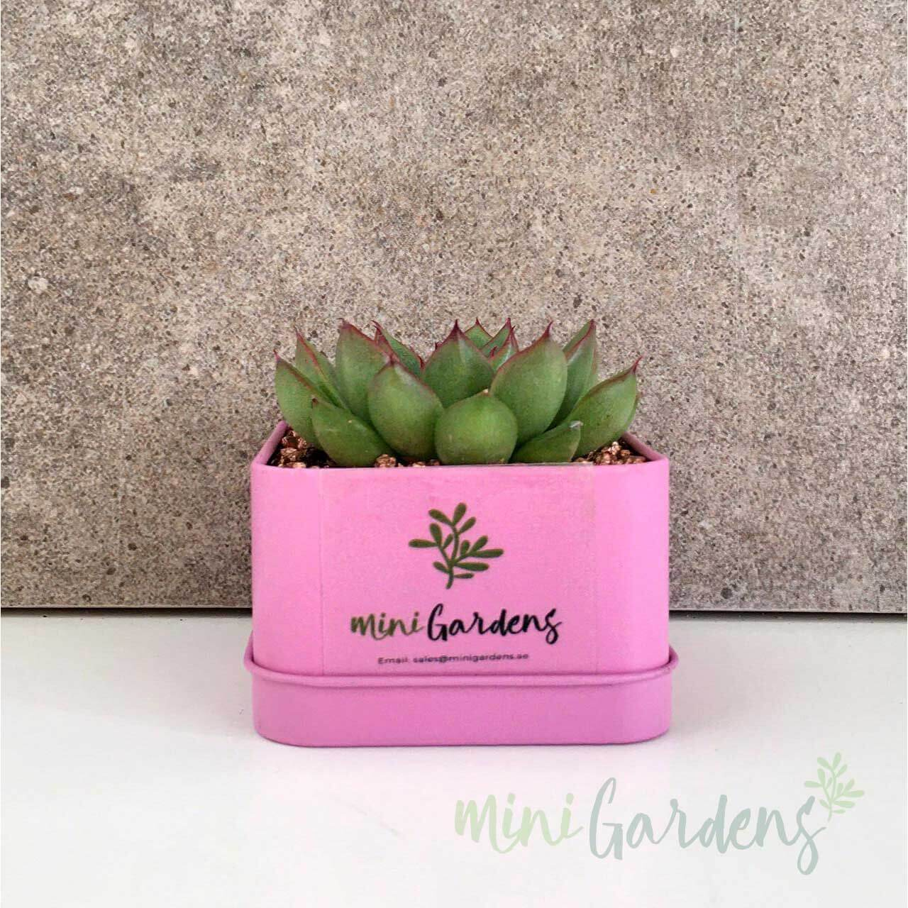 MiniGardens-Corporate-Gifts-online-Floral-Succulents-Dubai-Sharjah-Abu-Dhabi-UAE