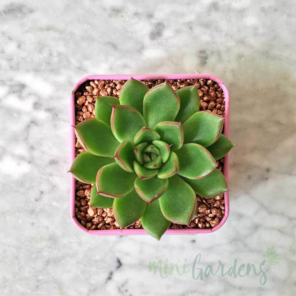 MiniGardens-Corporate-Gifts-Floral-Succulents-Dubai-Sharjah-Abu-Dhabi-UAE-Curated