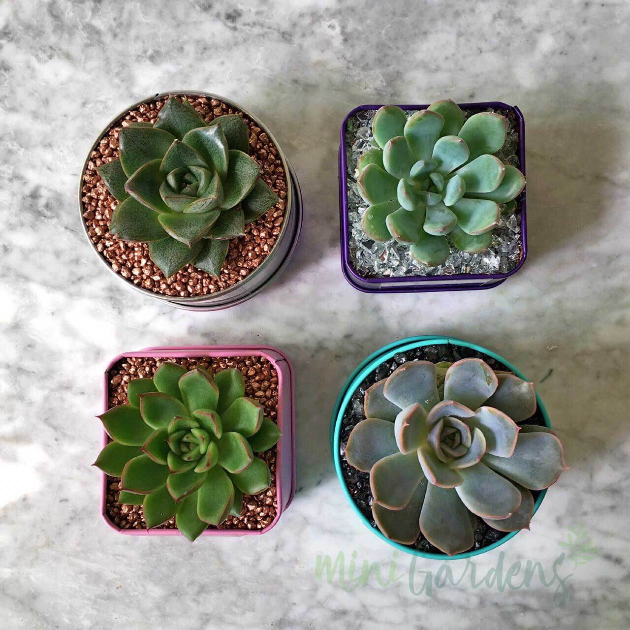 MiniGardens-Corporate-Gifts-Succulents-Dubai-Sharjah-Abu-Dhabi