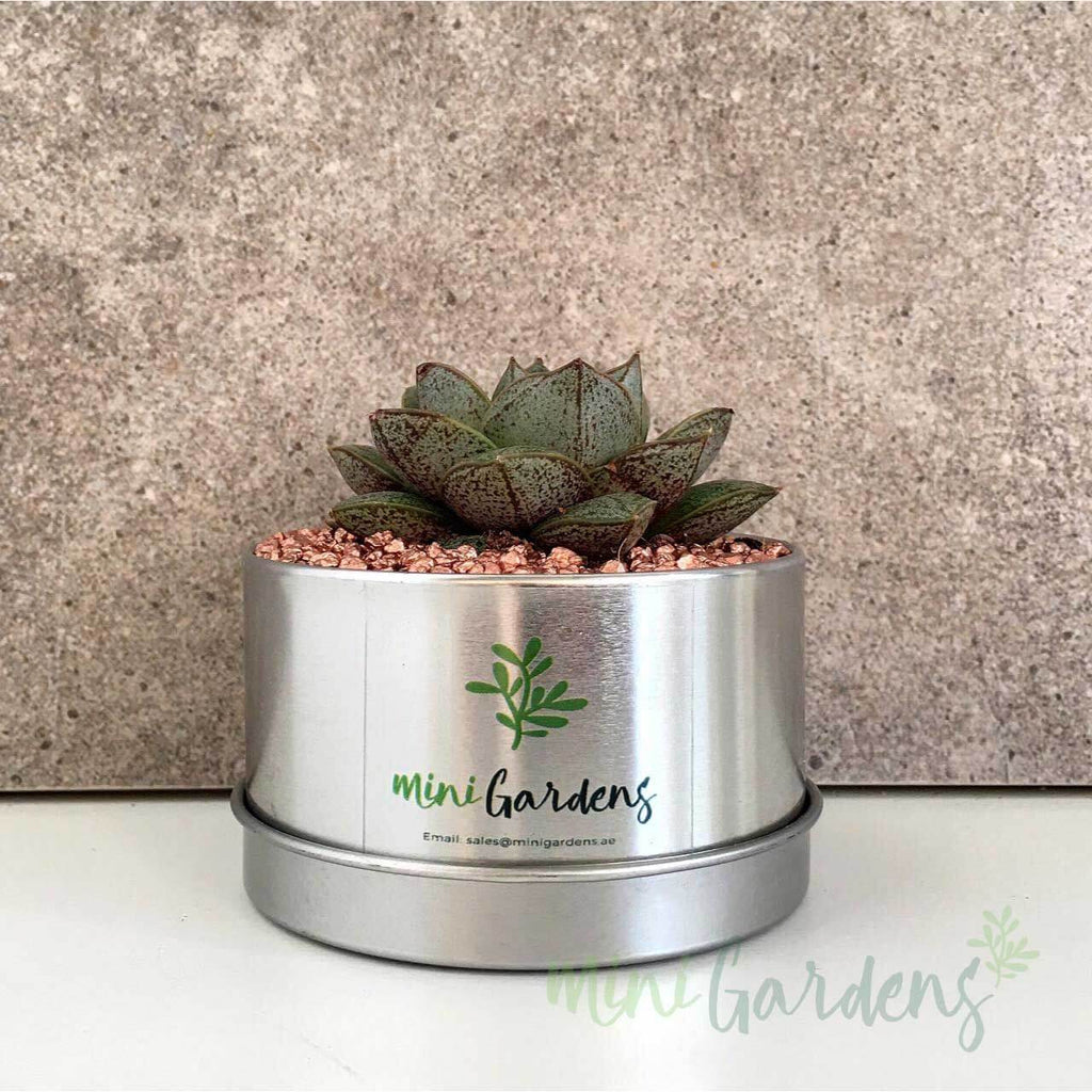 MiniGardens-Corporate-Gifts-Floral-Succulents-Dubai-Sharjah-Abu-Dhabi-UAE-Online