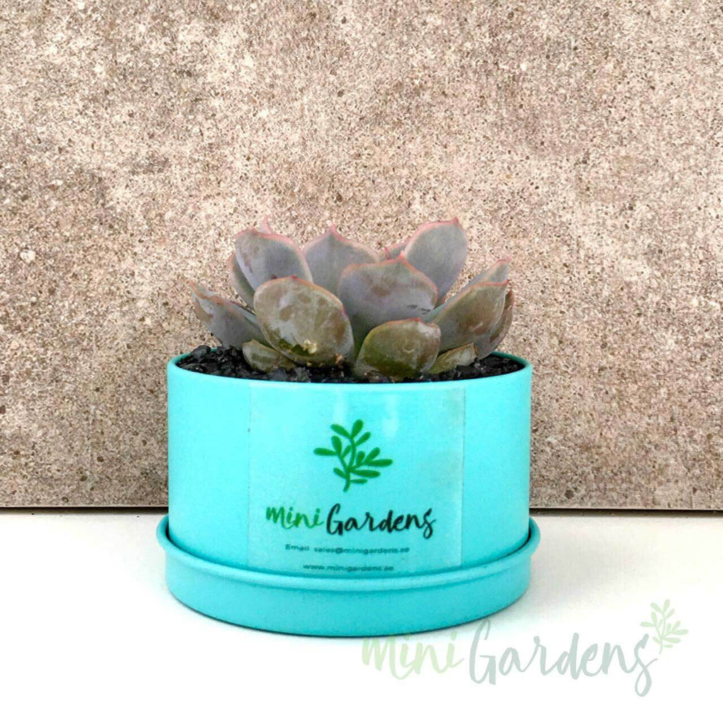 MiniGardens-Corporate-Gifts-Floral-Succulents-Dubai-Sharjah-Abu-Dhabi-UAE