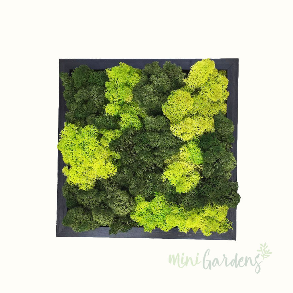 Mixed Green Moss Cube Green Wall Indoor Garden Minigardens.ae Free Delivery Dubai UAE