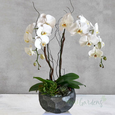 Orchid Gorgeous
