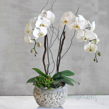Royal Orchid Garden(Medium)