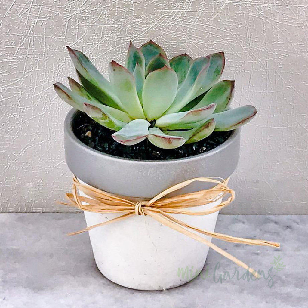 Succulents Gifts Dubai United Arab Emirates