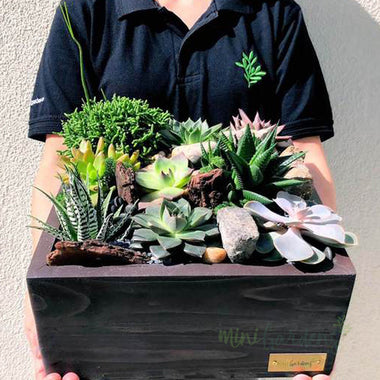 Succulent Tabletop MiniGarden (Square)