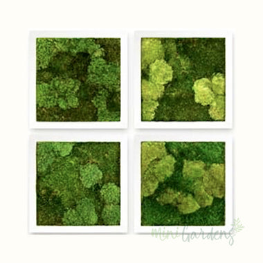 Ball Moss Wall Garden (Set of 4)