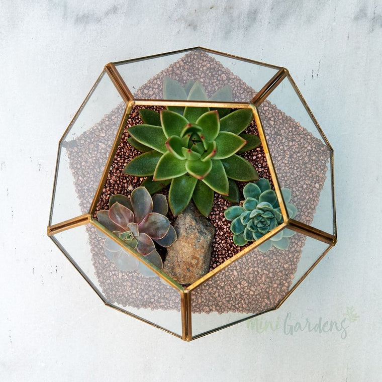 Terrarium Garden (Medium) Succulents (Glass Dodecahedron Medium) Minigardens.ae Free Shipping Dubai United Arab Emirates All Minigardens
