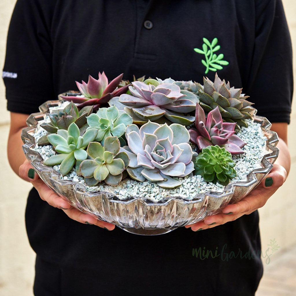 Audrey Succulents (Crystal Round Large) Minigardens.ae Free Shipping Dubai United Arab Emirates All Minigardens Corporate Gifts Flowers