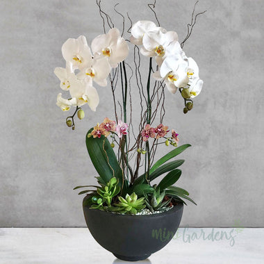 Blooming Orchid Garden