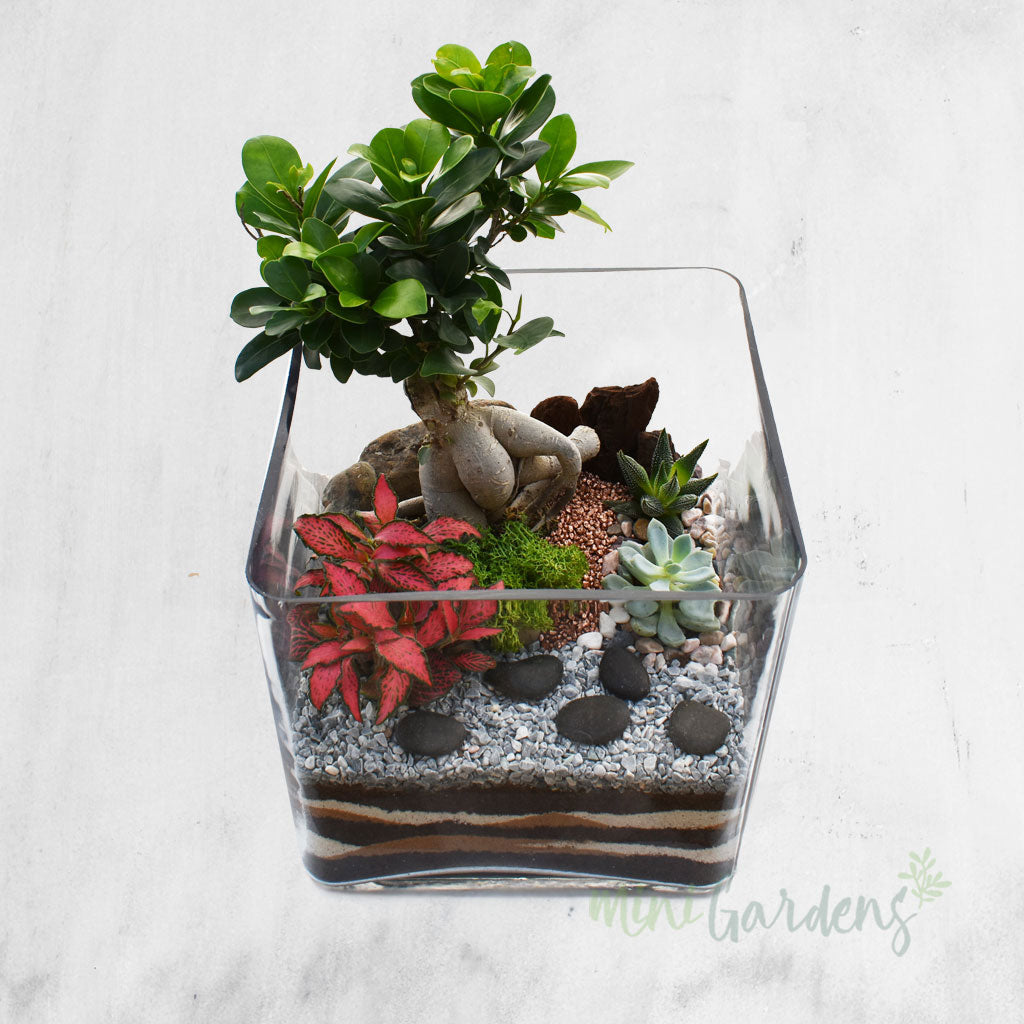 Buy Plants Succulents Arrangement Online Dubai UAE