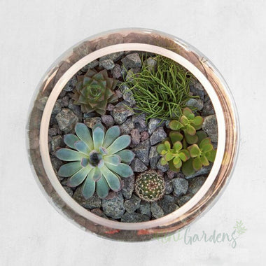 Send Online Rock Garden Succulents (Glass Round Wide Large) Minigardens.ae Free Shipping Dubai United Arab Emirates All Minigardens Corporate Gifts