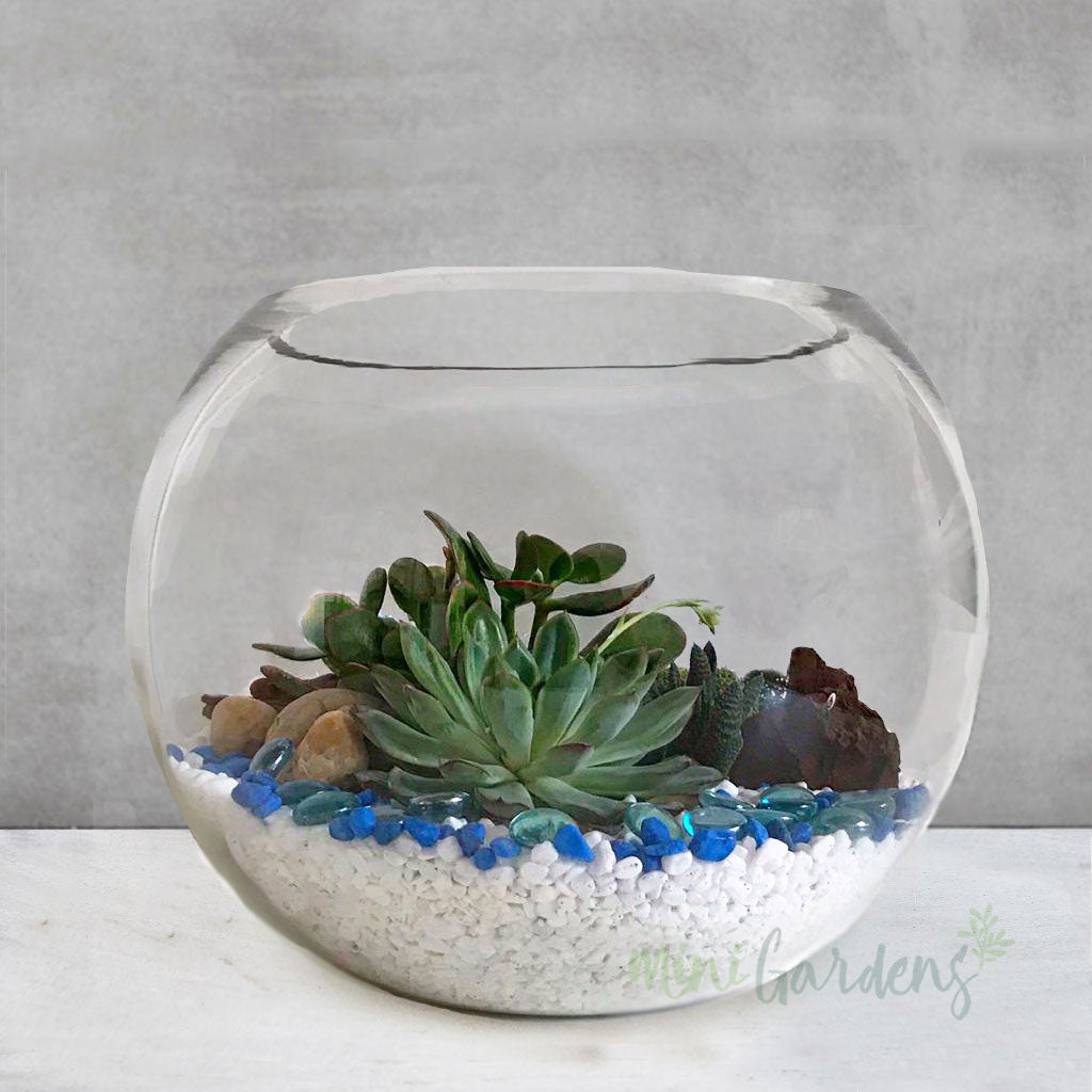 Seaside Terrarium Garden