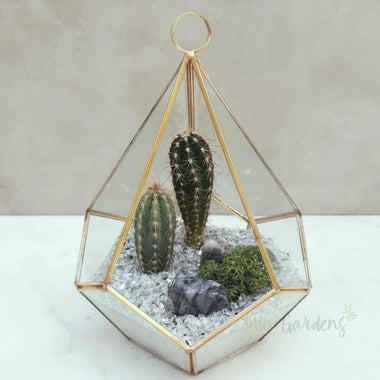 Cactus Terrarium Cactus (Diamond Terrarium Medium) Minigardens.ae Free Shipping Dubai United Arab Emirates All Minigardens Corporate Gifts