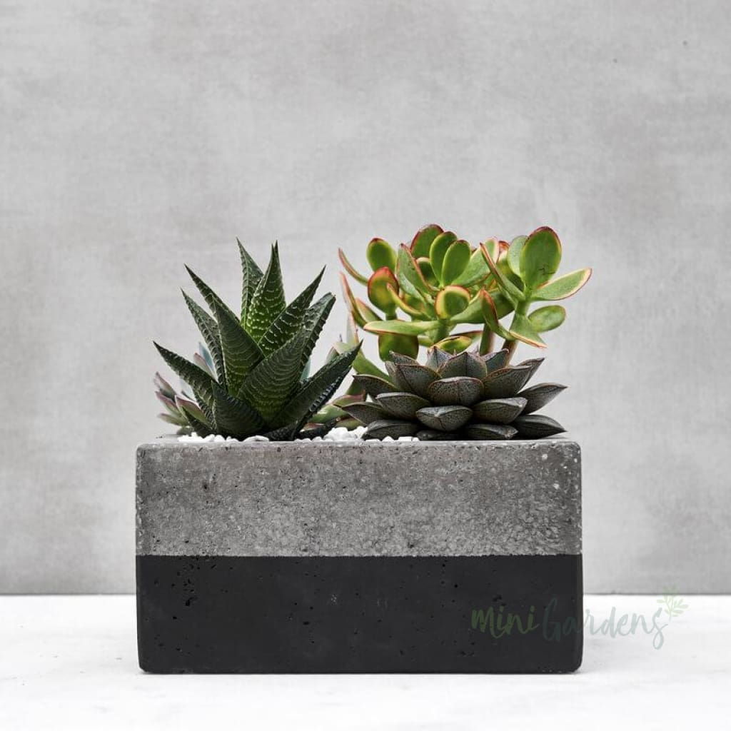 City Garden Succulents (Concrete Square Medium) Minigardens.ae Free Shipping Dubai United Arab Emirates