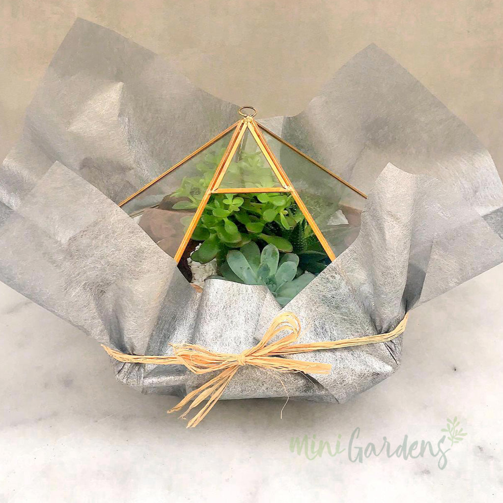 Large Terrarium Succulents Gifts MiniGardens.ae Dubai United Arab Emirates