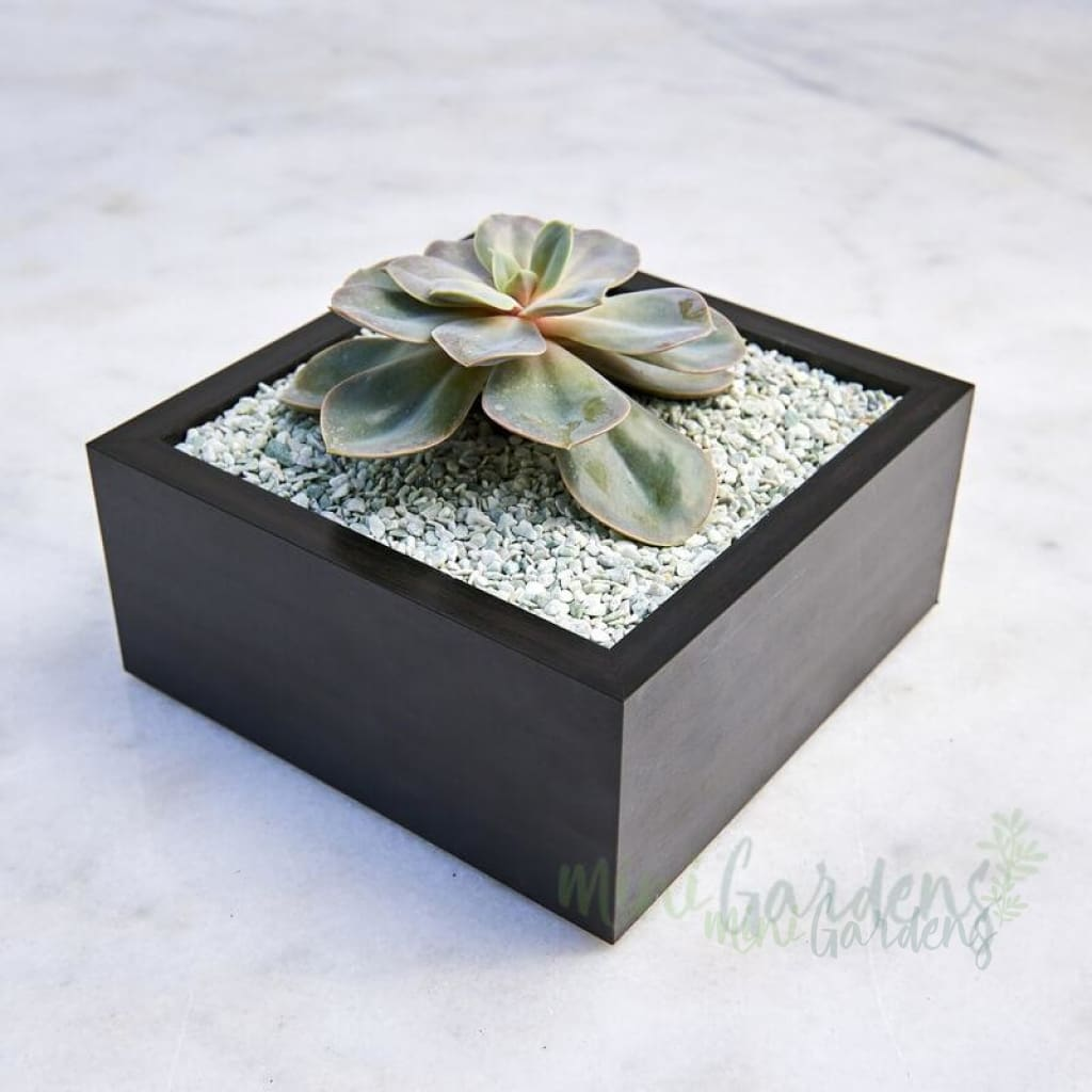 Emerald Garden Medium Succulent (Wood Square Medium) Minigardens.ae Free Shipping Dubai United Arab Emirates