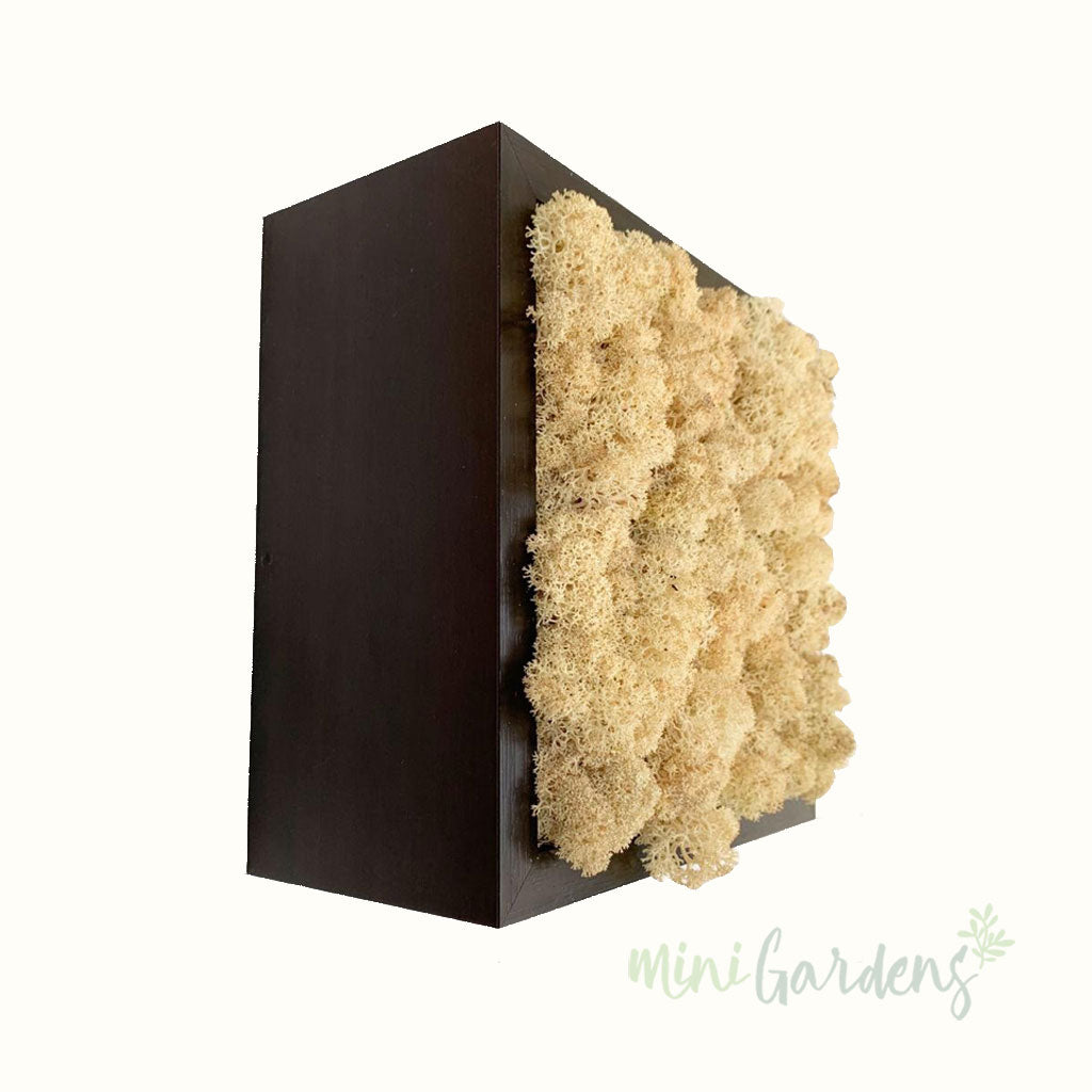 Forest Cube (natural moss wall art) Moss Wall MiniGardens.ae Free Delivery in Dubai United Arab Emirates