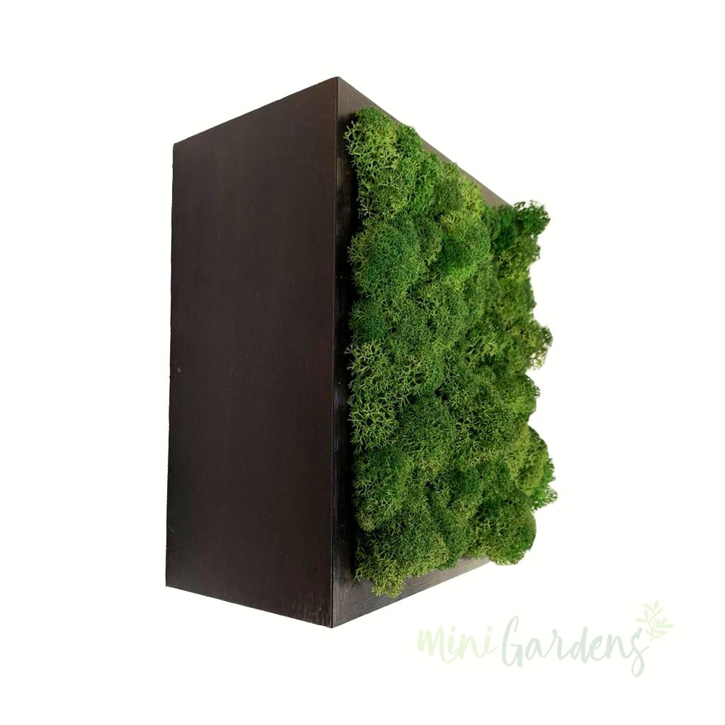 Forest Cube (dark green moss wall art) Moss Wall MiniGarderns.ae Free Delivery Dubai United Arab Emirates