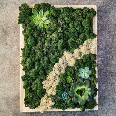 Hanging Wall Garden Moss & Succulents (Wood Rectangle Large) Minigardens.ae Free Shipping Dubai United Arab Emirates Corporate Gifts Flowers