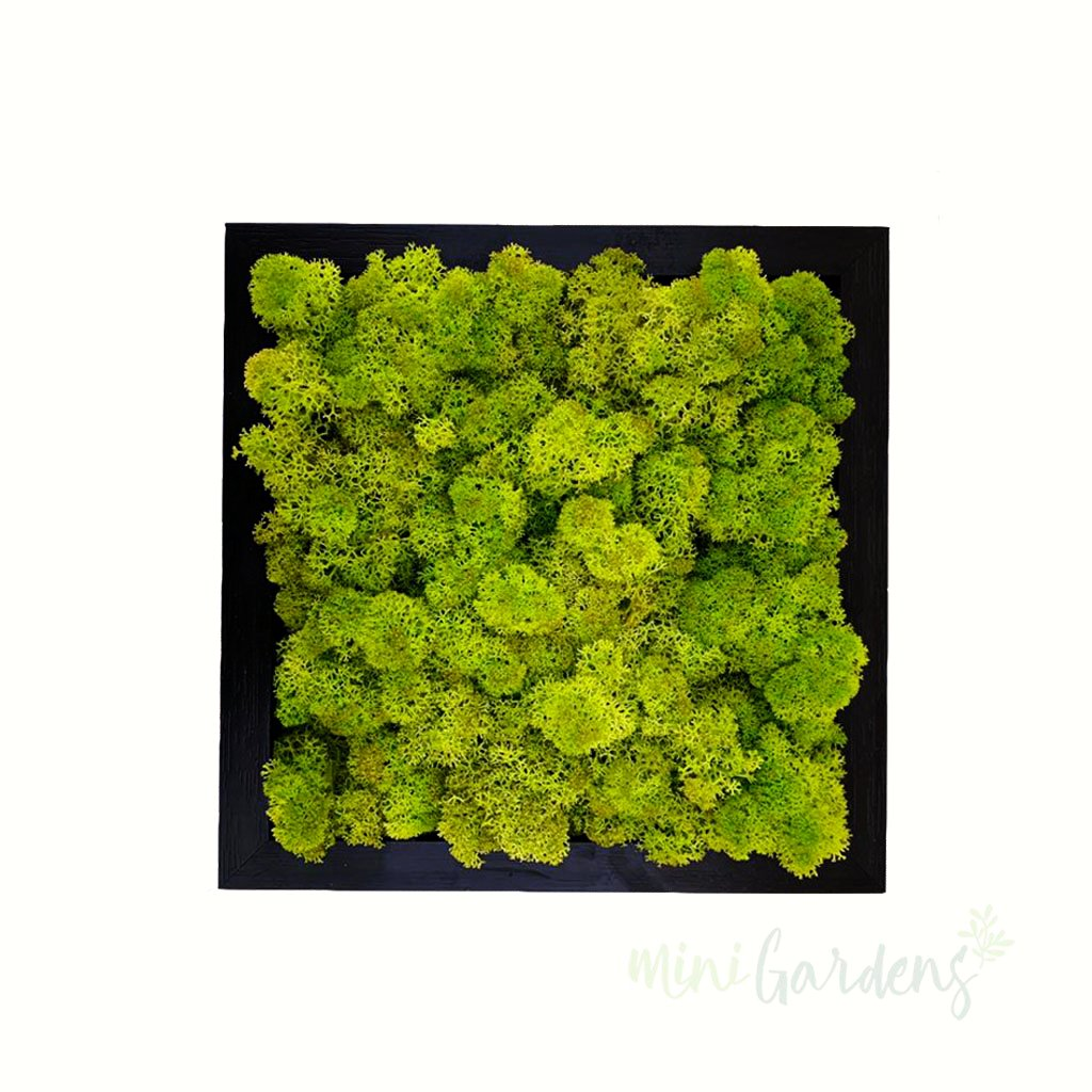 Forest Cube (light green moss wall art) Created By MiniGardens.ae Free Delivery Dubai United Arab Emirates