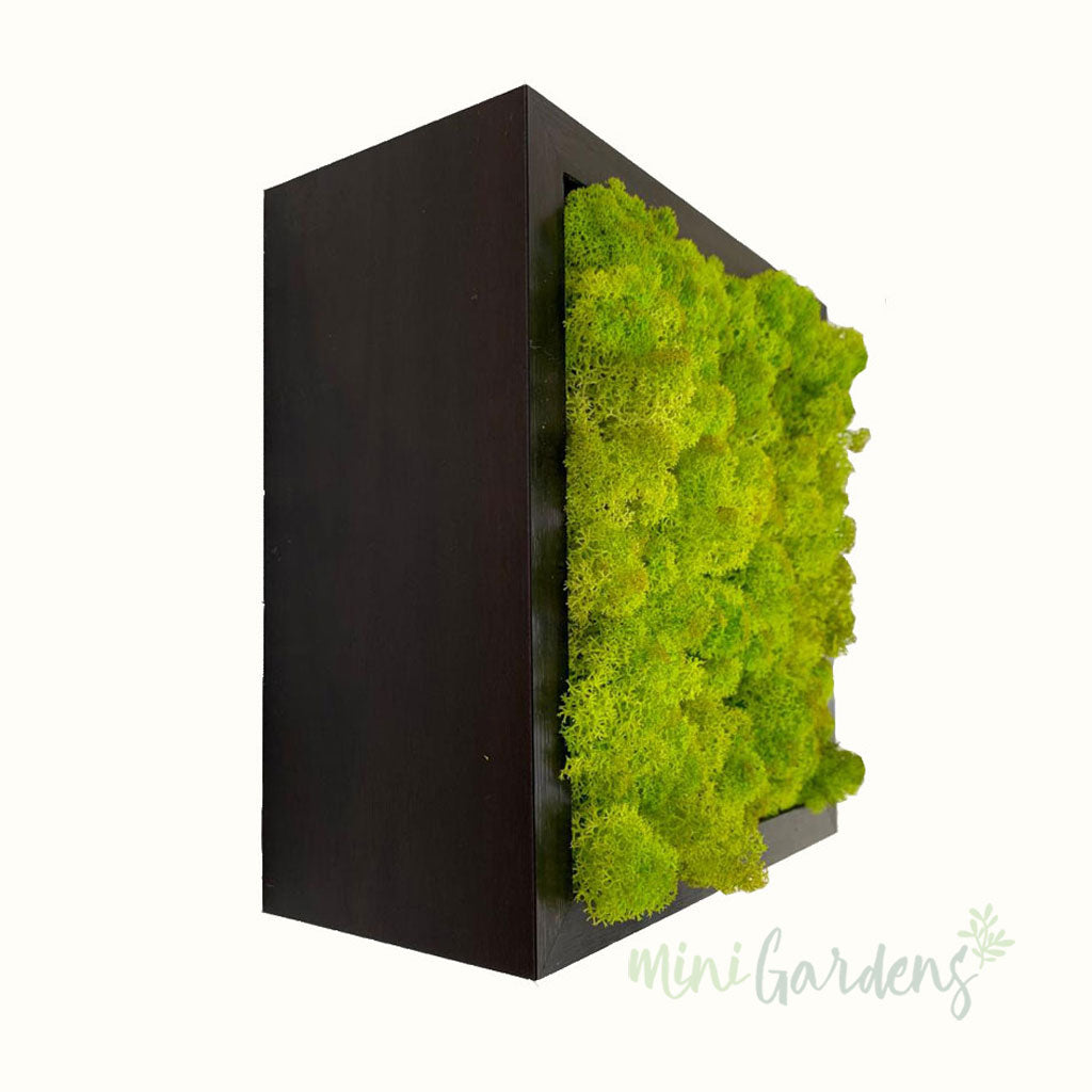 Moss Cube - Light Green