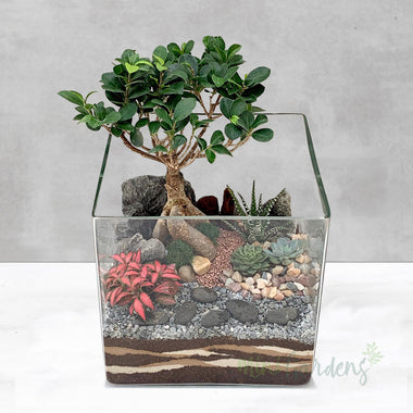 Send Succulents Arrangement Online MiniGardens.ae Free Delivery Dubai, United Arab Emirates.