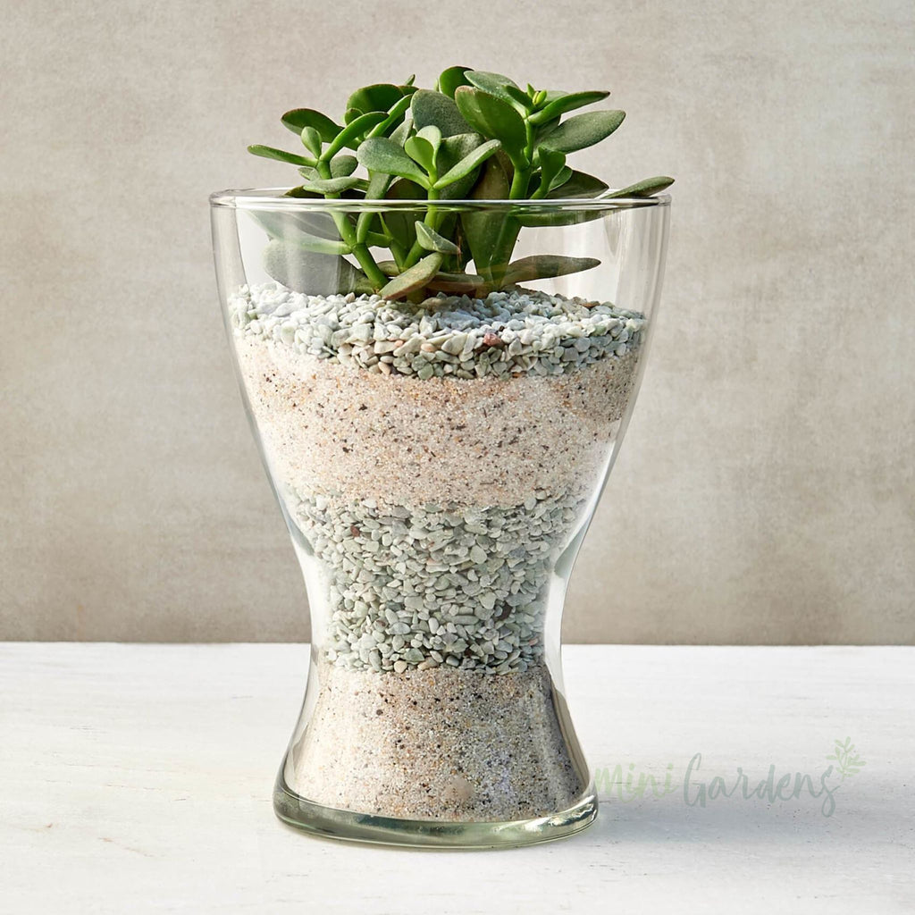 Grace Succulent (Glass Curved Small) Minigardens.ae Free Shipping Dubai United Arab Emirates Checkout Corporate Gifts Flowers House And