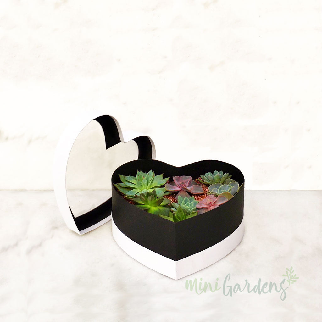 Heart Garden (White) Buy Online MiniGardens.ae  Delivery Dubai, Sharjah, UAE