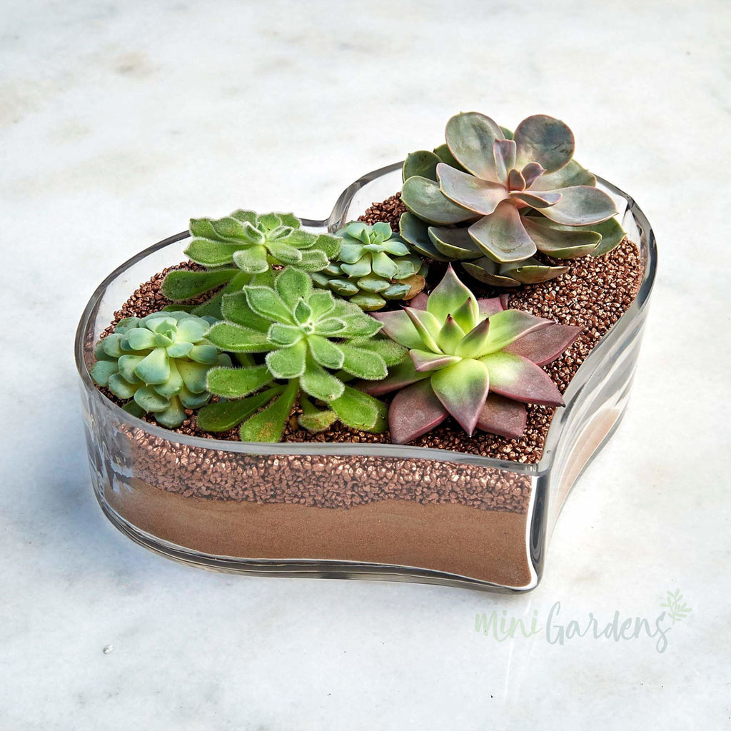 Succulent Heart (Gold) Succulents (Glass Heart Shaped Large) Minigardens.ae Free Shipping Dubai United Arab Emirates All Minigardens