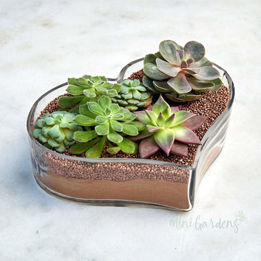 Succulent Heart (Gold) Succulents (Glass Heart Shaped Large) Minigardens.ae Free Shipping Dubai United Arab Emirates