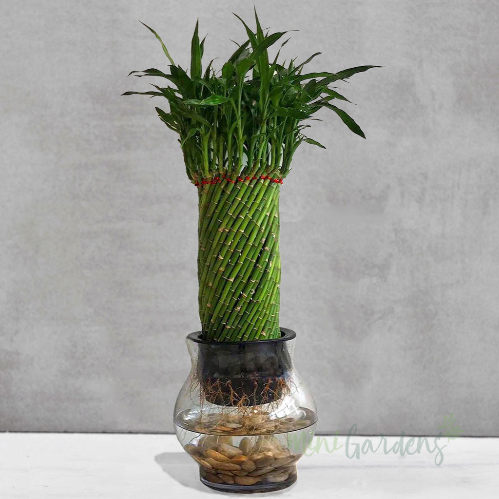 Looking for indoor-plants-online-in-Dubai, UAE? Order now