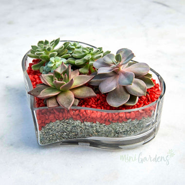 Heart Of Joy Succulents (Glass Heart Shaped Wide Large) Minigardens.ae Free Shipping Dubai United Arab Emirates