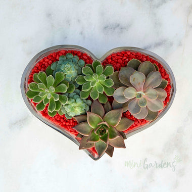 Heart Of Joy Succulents (Glass Heart Shaped Wide Large) Minigardens.ae Free Shipping Dubai United Arab Emirates All Minigardens Corporate
