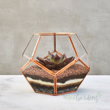 Luxe Terrarium (Small) Rose Gold