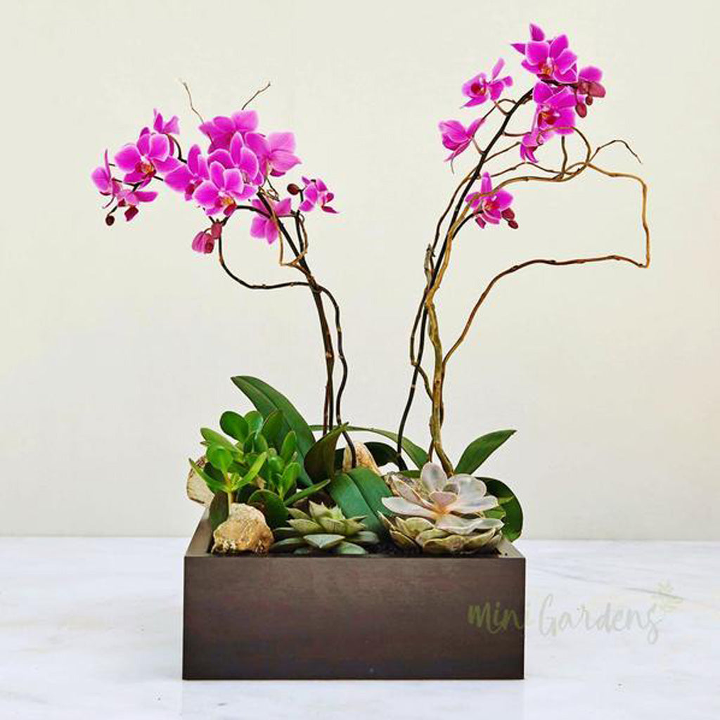 Buy orchids flowers gifts plants garden buy online minigarden ae dubai uae