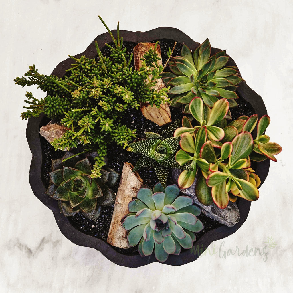 Jade Garden (Onyx) Succulents (Fibre Concrete Round Large) Minigardens.ae Free Shipping Dubai United Arab Emirates All Minigardens Corporate
