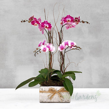Orchid Allure