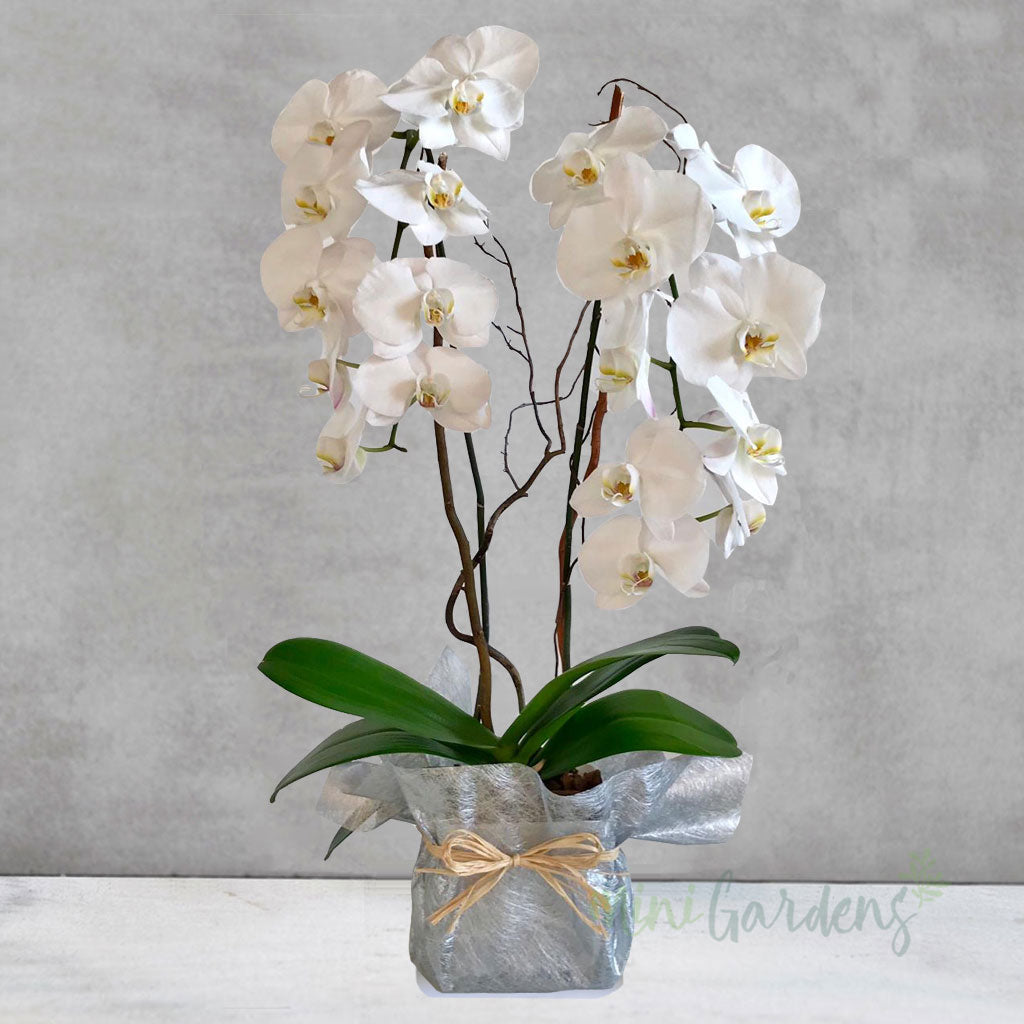 Orchid Passion