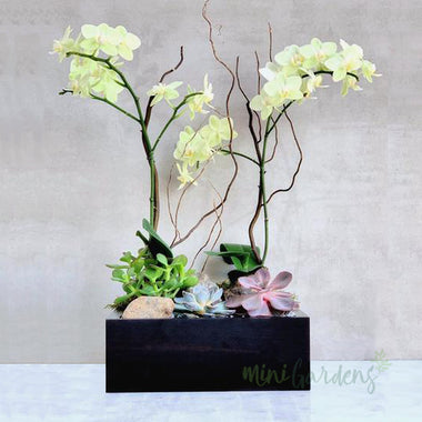 orchids flowers gifts plants garden buy online minigarden ae dubai uae