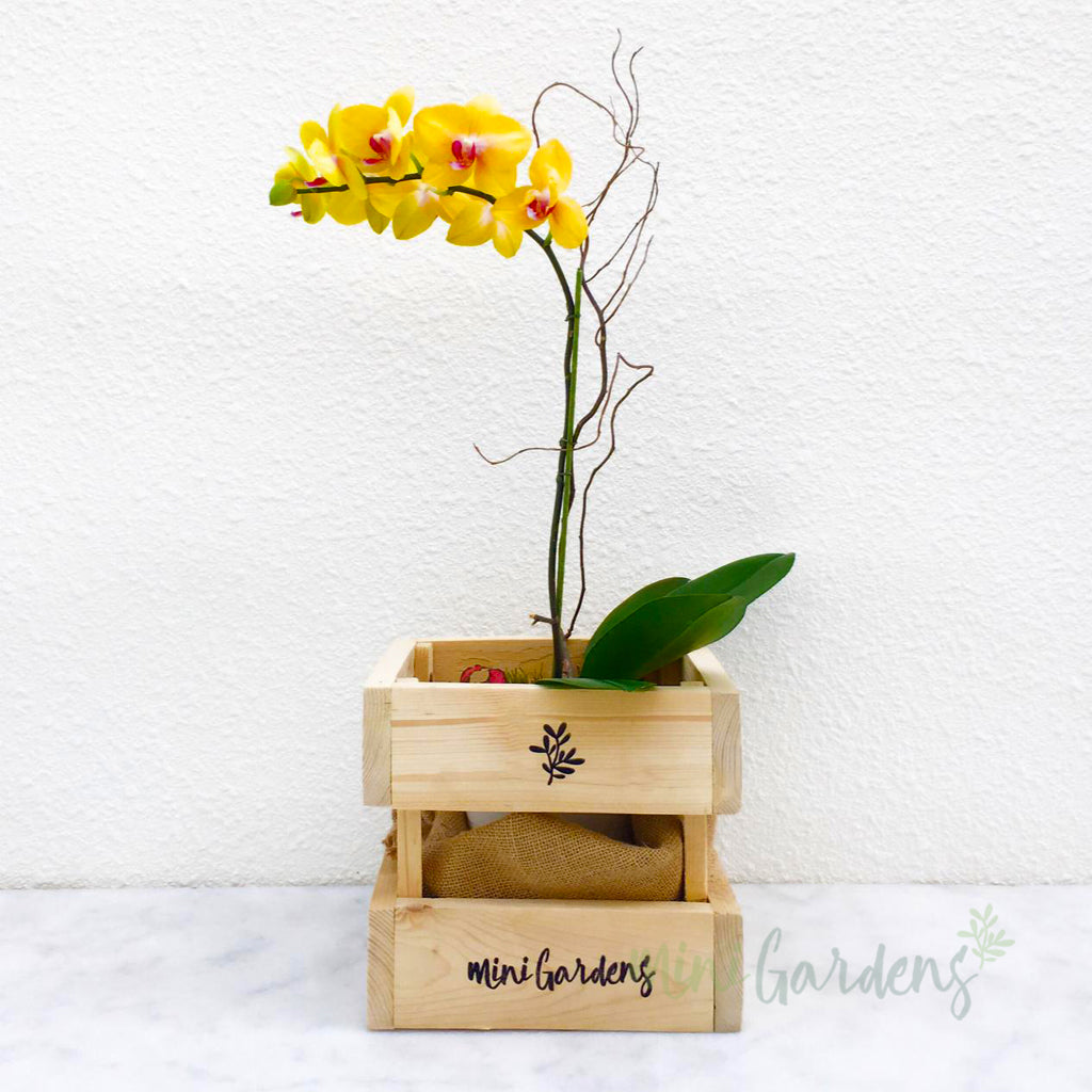 Send Orchids Gifts Online Free Delivery in Dubai