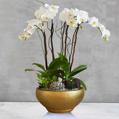 Orchid Destiny(Gold)