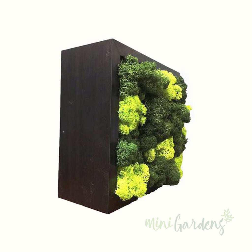 Buy Moss Wall Green Wall Dubai MiniGardens UAE