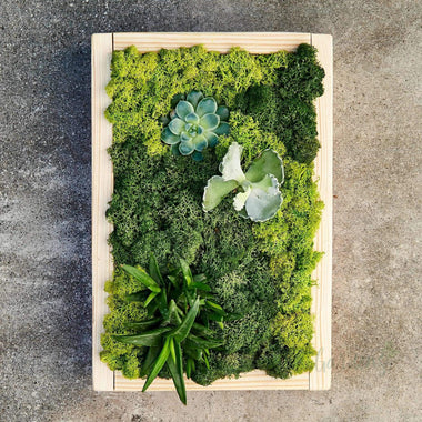 Park Succulents (Wood Rectangle Large) Minigardens.ae Free Shipping Dubai United Arab Emirates All Minigardens Corporate Gifts Flowers