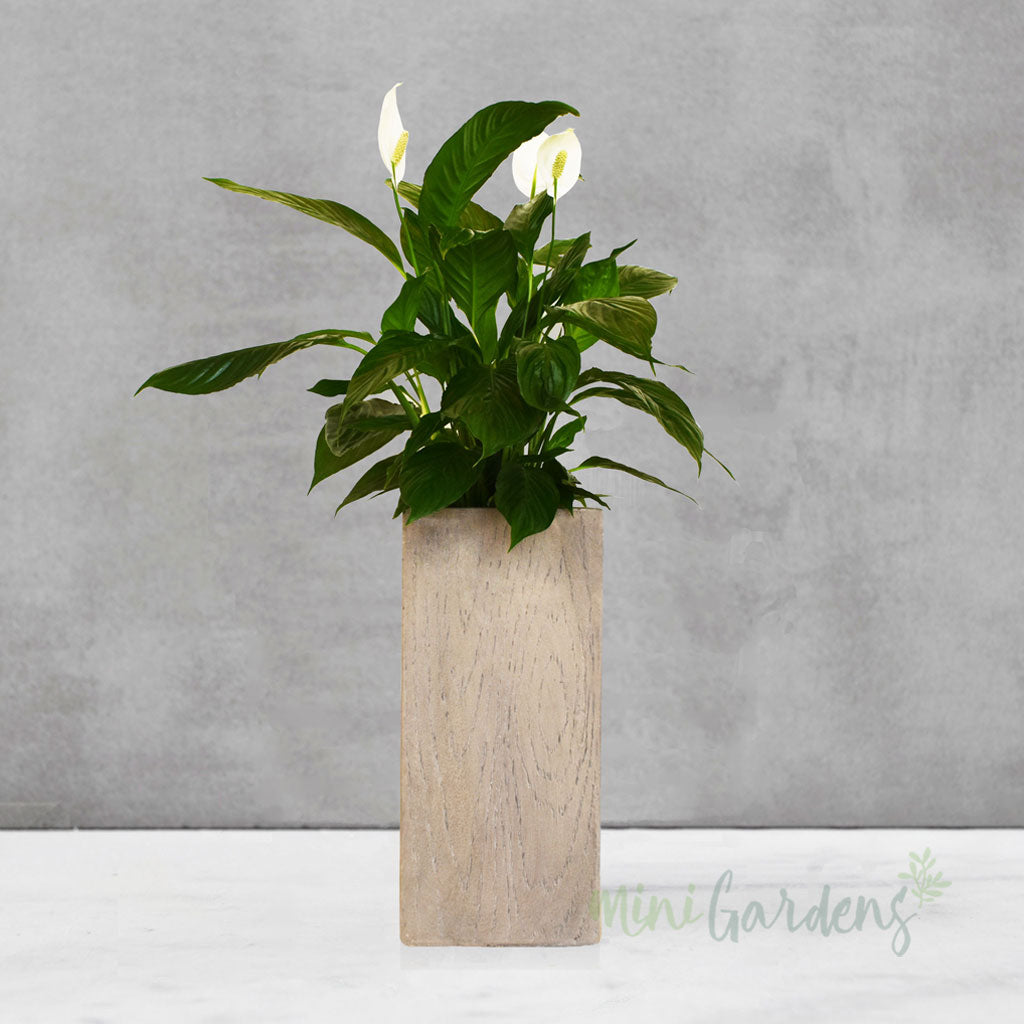 indoor plants online