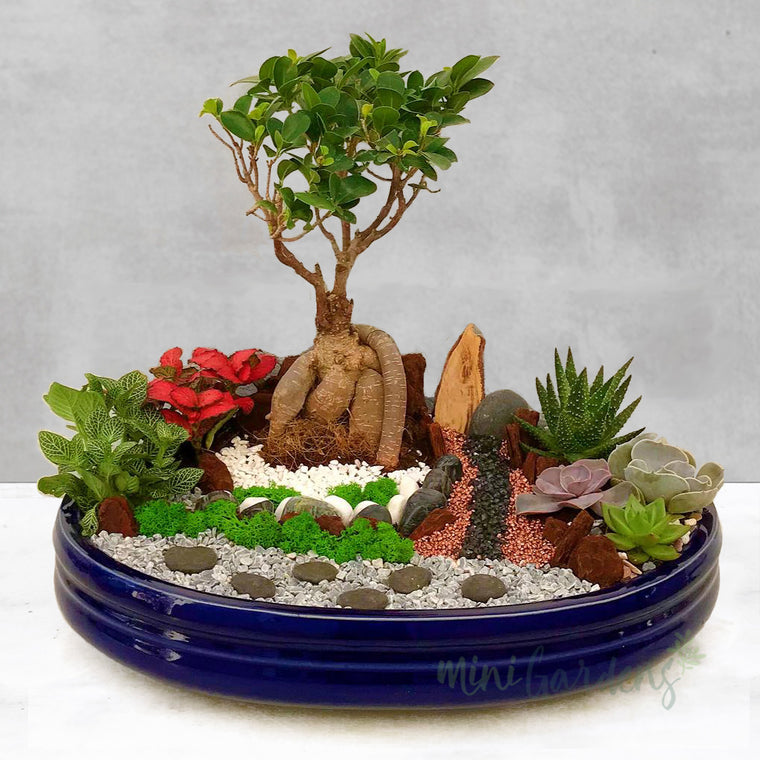 Peaceful Garden (Large) Succulents Flowers Gifts Plants Bouquet Shop Online MiniGardens.ae Free Delivery in DUbai, UAE.