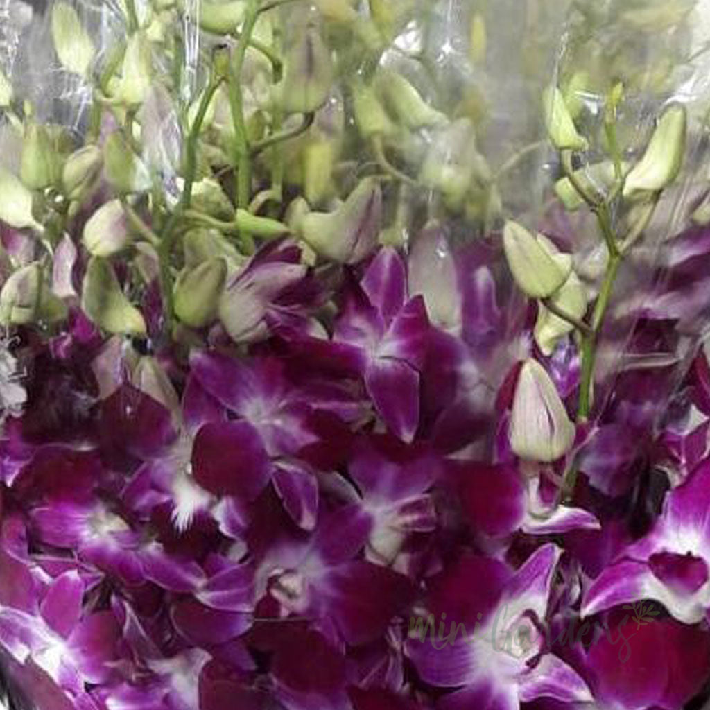 MiniGardens Freshly Cut Dendrobium Orchids- 40 nos White Orchids and 35 nos Purple Orchids