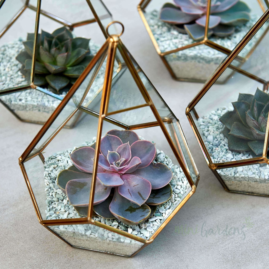Pink Terrarium Succulent (Diamond Terrarium Medium) Minigardens.ae Free Shipping Dubai United Arab Emirates All Minigardens Corporate Gifts